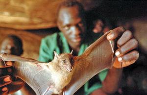 پسلرزههای ابولا