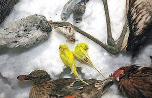پرندگان یخی باغ پرندگان شیراز